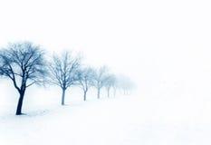 Bomen op een sneeuwdag stock afbeelding