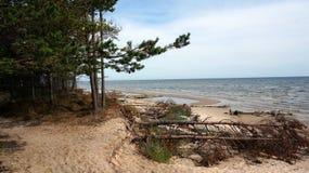 Bomen op een strand royalty-vrije stock afbeeldingen