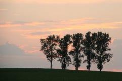 Bomen op gebied royalty-vrije stock afbeeldingen