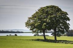 Bomen op Gebied Royalty-vrije Stock Fotografie