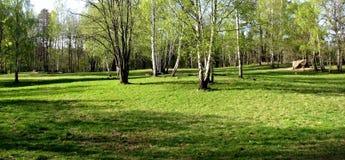 Bomen op gebied Stock Afbeelding