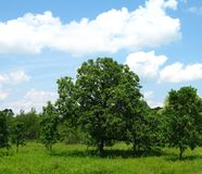 Bomen op Gebied Royalty-vrije Stock Afbeelding