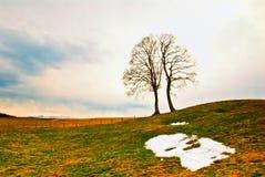 Bomen op gebied in de lente stock foto