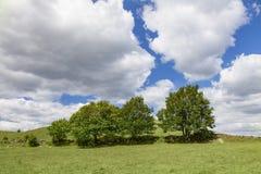 Bomen op grasrijke heuvel Stock Foto