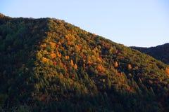 Bomen op helling royalty-vrije stock foto's