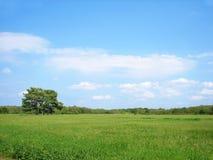 Bomen op het de lentegebied Stock Foto's