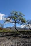 Bomen op het Eiland Maui Stock Afbeelding