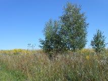 Bomen op het gebied royalty-vrije stock foto's
