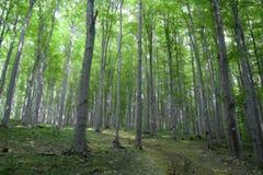 Bomen op het gezicht Royalty-vrije Stock Foto's