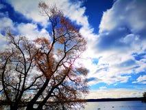 Bomen op het meer stock fotografie