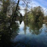 Bomen op het meer Royalty-vrije Stock Afbeelding