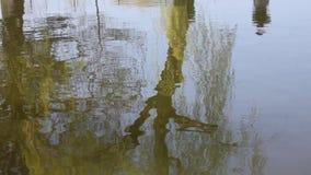 Bomen op het meer worden weerspiegeld dat stock videobeelden