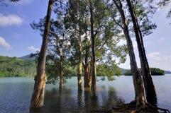 Bomen op het Reservoir Stock Foto