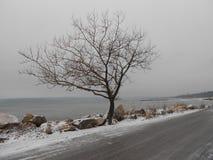 Bomen op het strand stock foto's