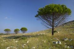 Bomen op heuvel Stock Afbeeldingen