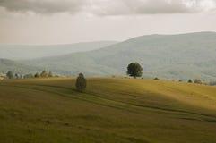 Bomen op heuvel Royalty-vrije Stock Afbeelding