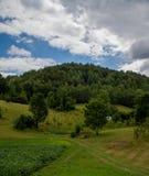 Bomen op heuvel Royalty-vrije Stock Foto's
