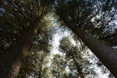 Bomen op heuvelige valleien Royalty-vrije Stock Afbeeldingen