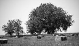 Bomen op hooigebied stock foto's