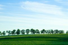 Bomen op horizon