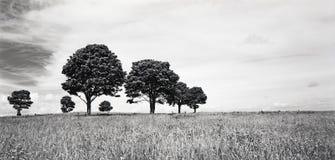 Bomen op Horizon Royalty-vrije Stock Foto's