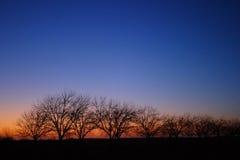 Bomen op Horizon bij Zonsondergang ver2 Stock Afbeelding