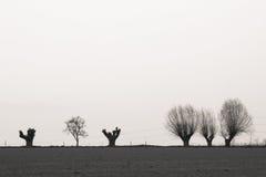 Bomen op horizont Stock Afbeeldingen