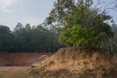 Bomen op kleine heuvel met kleine klip en bos op achtergrond stock afbeelding
