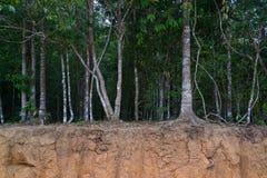Bomen op kleine klip die hun wortels tonen stock foto's