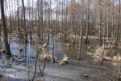 Bomen op moerasland Stock Afbeelding