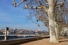 Bomen op Quais du de Rhône in Lyon Stock Afbeeldingen