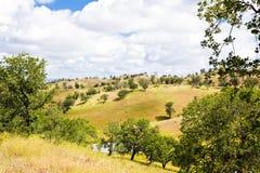 Bomen op Rolling Heuvels Stock Afbeelding