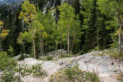 Bomen op Rots in Rocky Mountains stock foto's