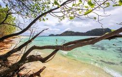 Bomen op strand dichtbij een strand Stock Afbeeldingen
