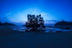 Bomen op strand en zonsopgang bij koh yaonoi Stock Foto's
