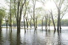 Bomen op water Stock Fotografie