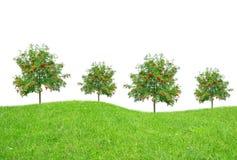 Bomen op weide Stock Afbeelding