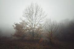 Bomen op weide door de mist royalty-vrije stock foto