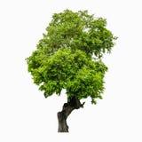 Bomen op witte achtergrond Royalty-vrije Stock Afbeelding