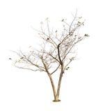 Bomen op witte achtergrond Royalty-vrije Stock Foto's