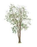Bomen op witte achtergrond Stock Foto's