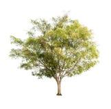 Bomen op witte achtergrond Royalty-vrije Stock Afbeeldingen