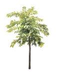 Bomen op witte achtergrond Royalty-vrije Stock Foto