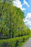 Bomen, in orde gemaakte struiken en weg stock foto