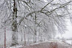 Bomen over de omheining bij de bevroren vijver royalty-vrije stock fotografie