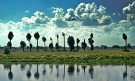 Bomen over de rivier Royalty-vrije Stock Fotografie