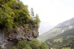 Bomen over een rots in de afgrond van vallei Royalty-vrije Stock Foto
