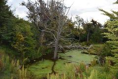 Bomen over het moeras Stock Foto