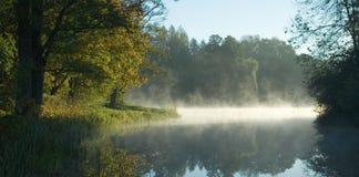 Bomen over kalm water bij dageraad Stock Afbeeldingen