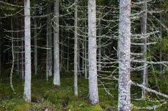 Bomen overal Royalty-vrije Stock Fotografie